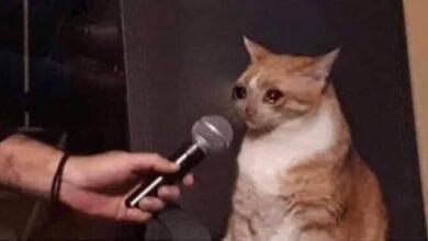 صورة قطة تبكي على المايك