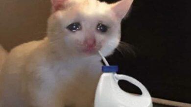 صورة قطة تبكي – كلوروكس