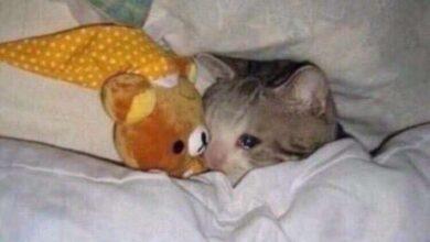 صورة قطة تبكي
