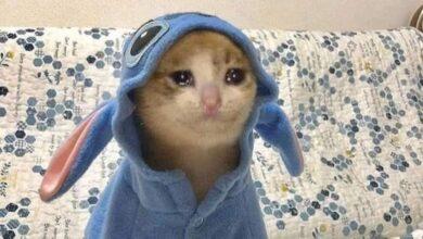 صورة قطة حزينة