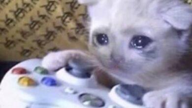 صورة قطة حزينة تلعب بلايستيشن