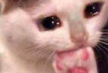 صورة قطة حزينة تأكل قدمها